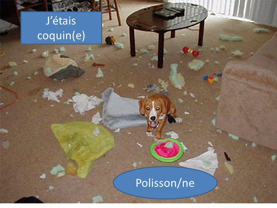 J'étais coquin(e) Polisson/ne
