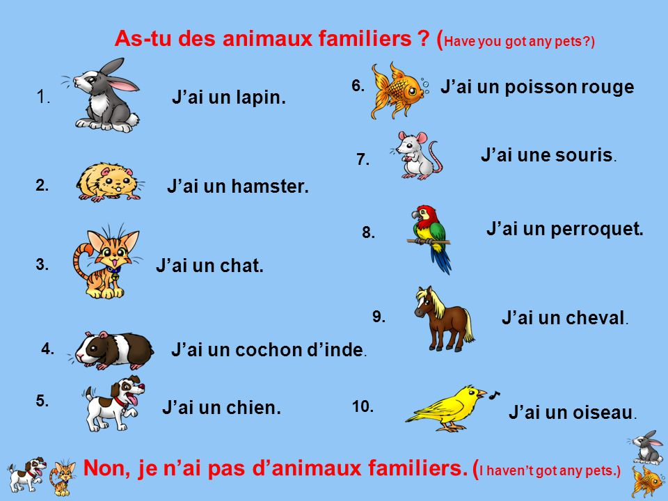 As-tu des animaux familiers (Have you got any pets )
