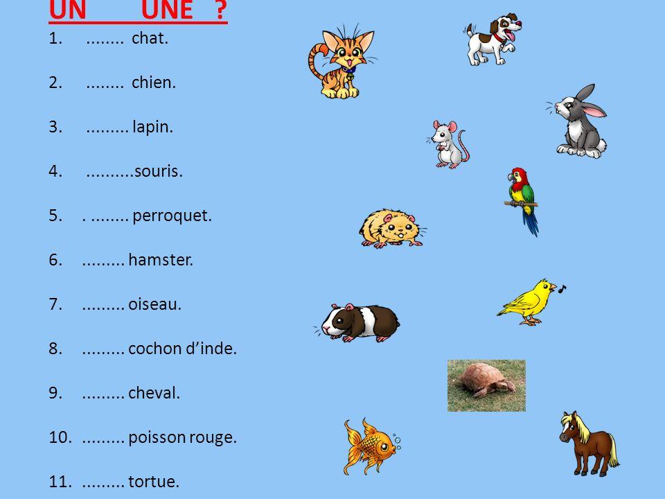 UN UNE ........ chat. ........ chien. ......... lapin. ..........souris. . ........ perroquet.