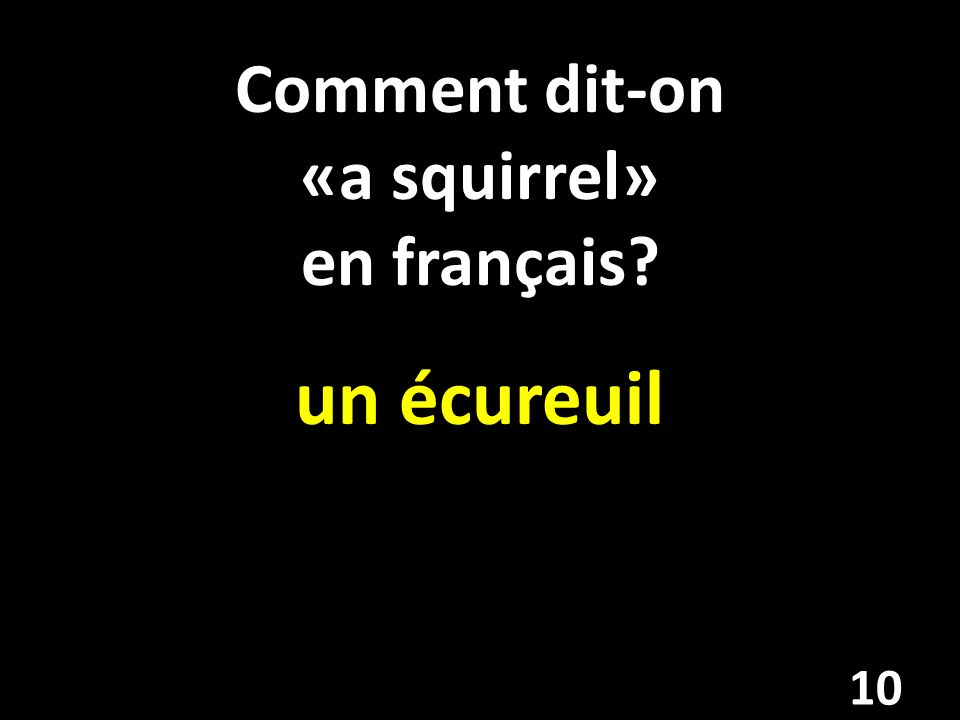 Comment dit-on «a squirrel» en français