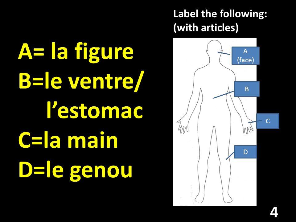 A= la figure B=le ventre/ l'estomac C=la main D=le genou