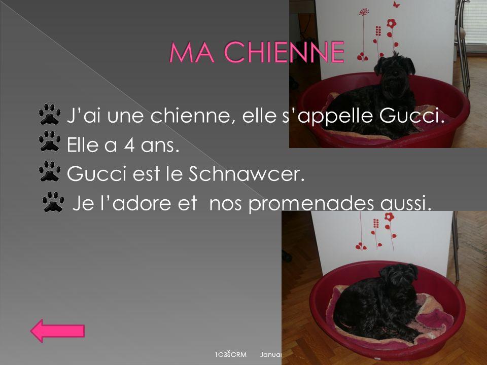 MA CHIENNE J'ai une chienne, elle s'appelle Gucci. Elle a 4 ans. Gucci est le Schnawcer. Je l'adore et nos promenades aussi.