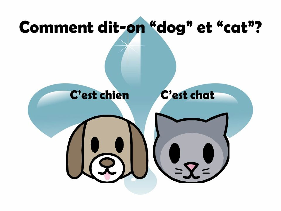 Comment dit-on dog et cat