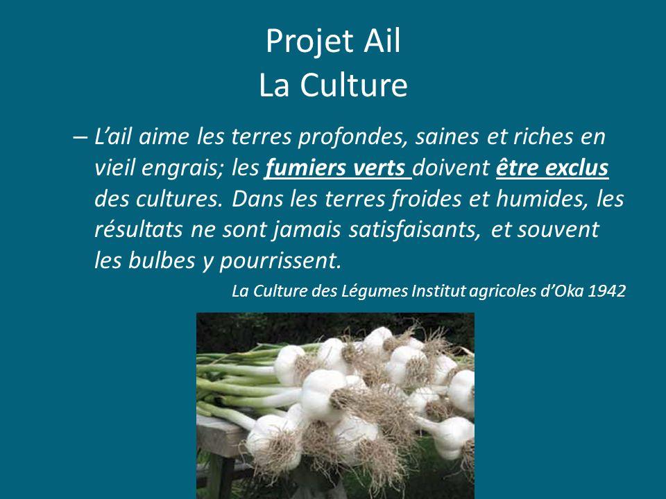 Projet Ail La Culture