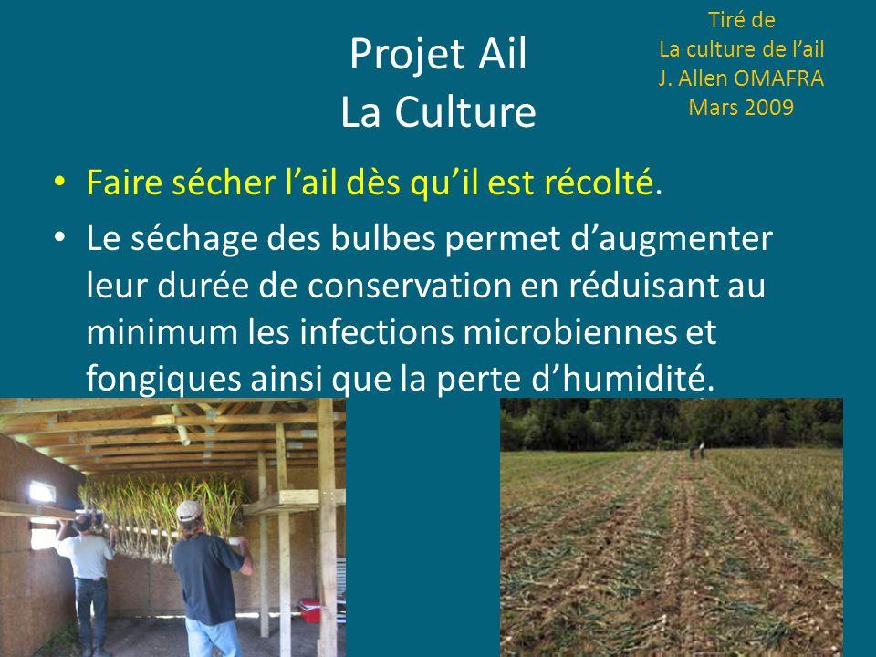 Projet Ail La Culture Faire sécher l'ail dès qu'il est récolté.