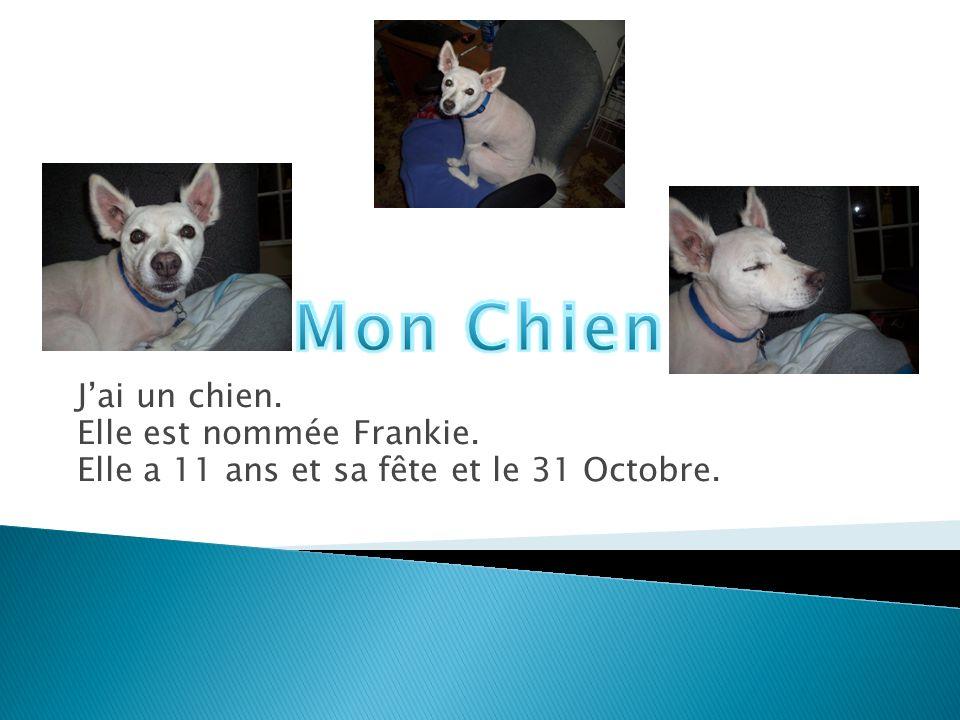 Mon Chien J'ai un chien. Elle est nommée Frankie.