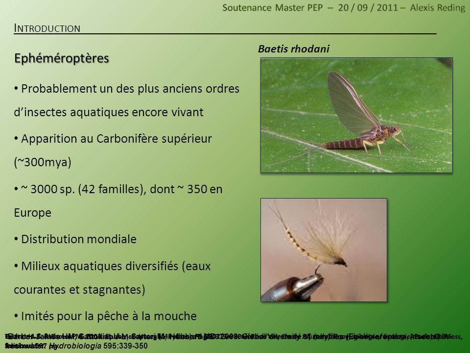 Ephéméroptères Introduction