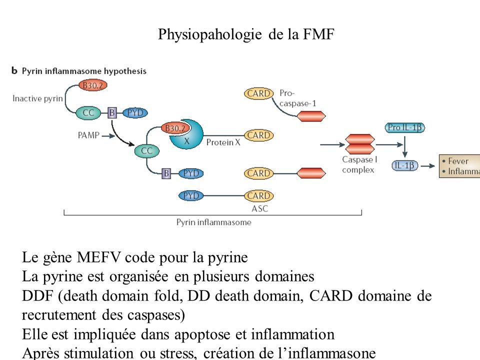 Physiopahologie de la FMF