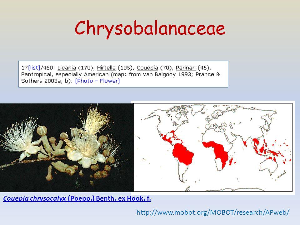 Chrysobalanaceae Couepia chrysocalyx (Poepp.) Benth. ex Hook. f.