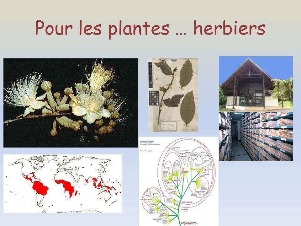 Pour les plantes … herbiers