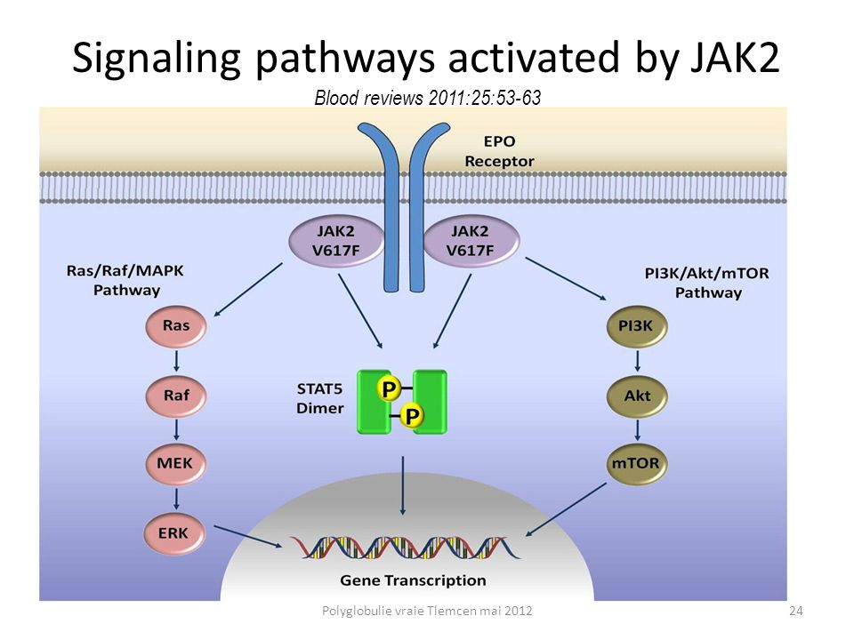 Signaling pathways activated by JAK2 Blood reviews 2011;25:53-63