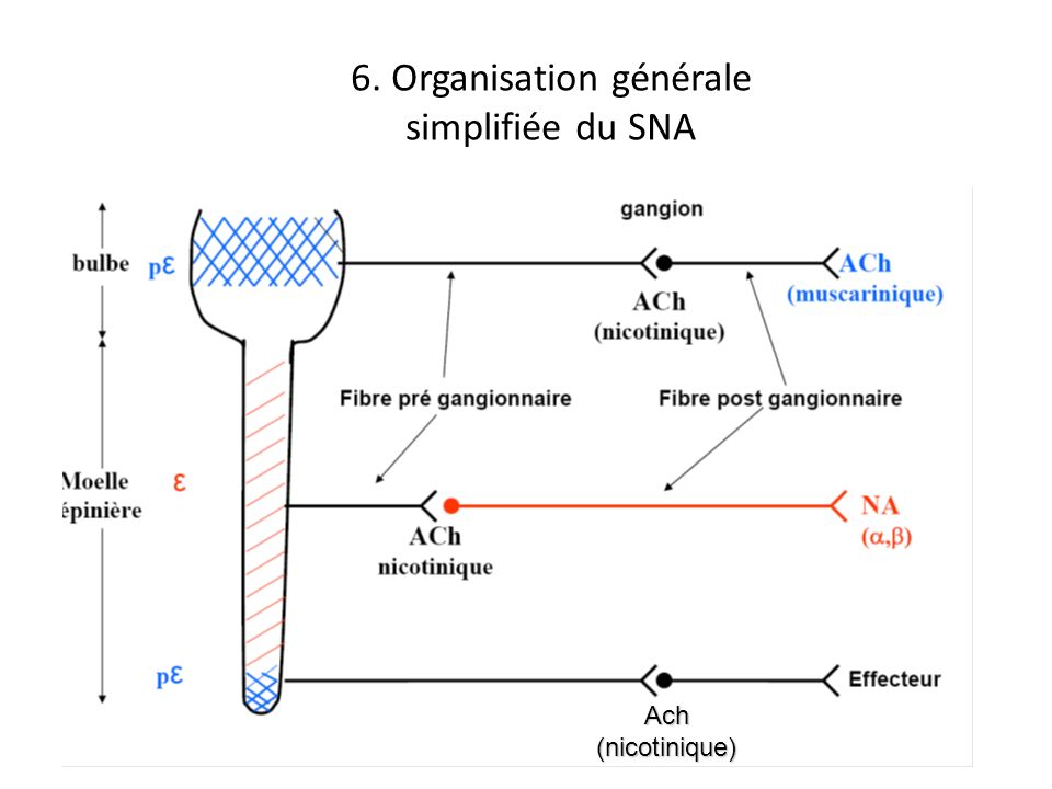 6. Organisation générale