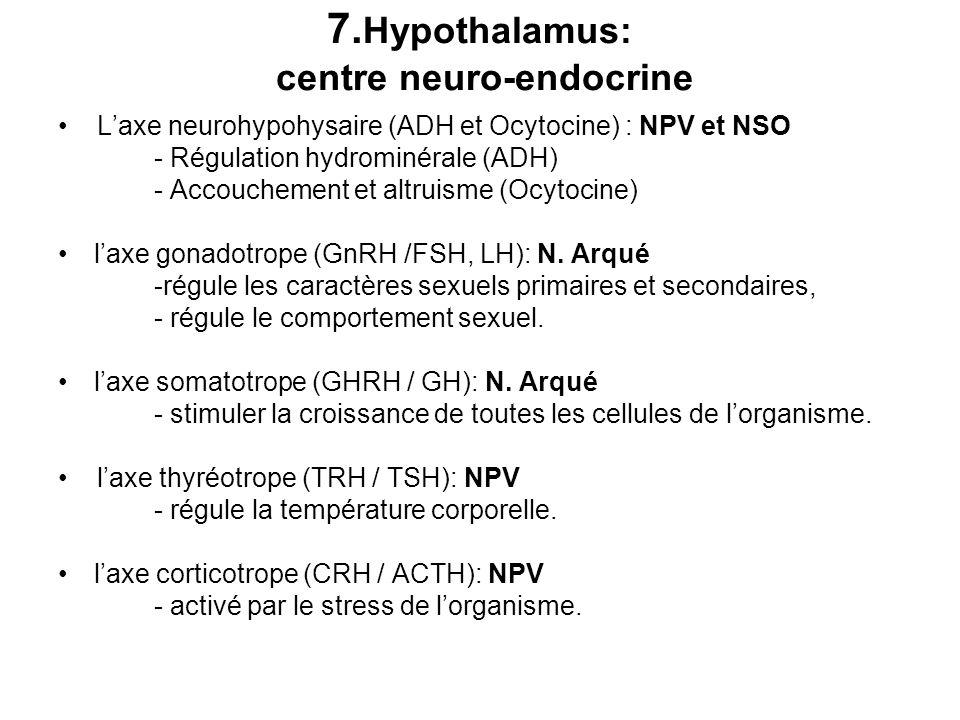 7.Hypothalamus: centre neuro-endocrine