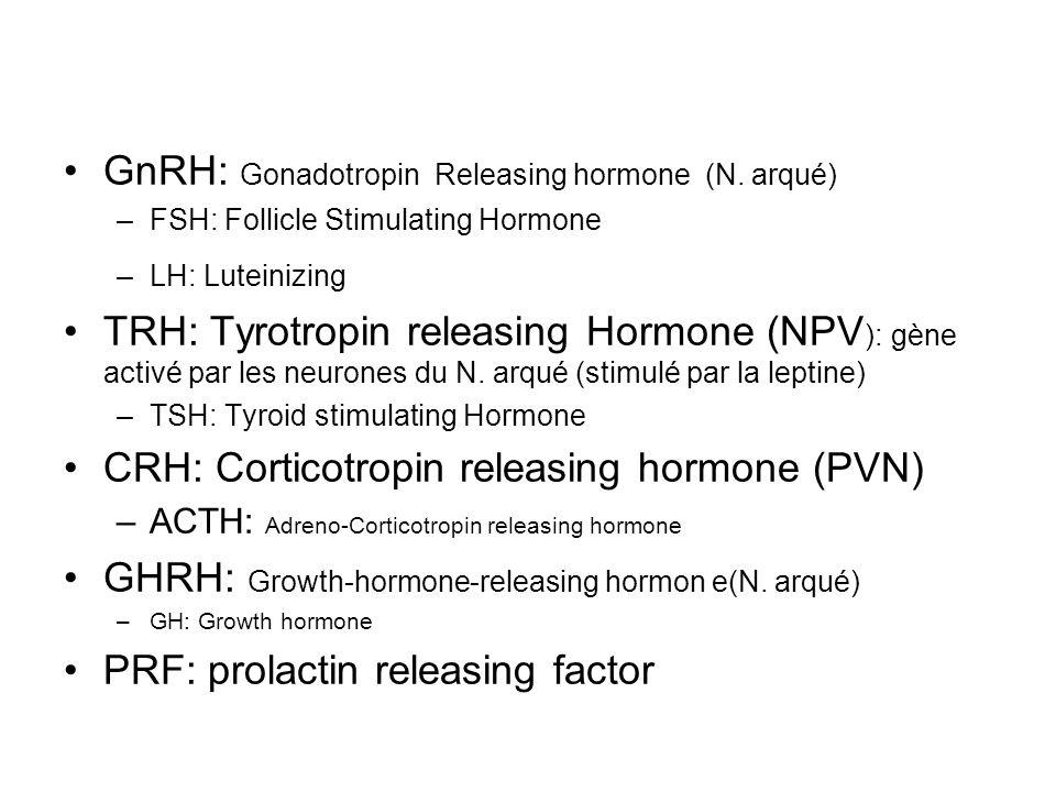 GnRH: Gonadotropin Releasing hormone (N. arqué)
