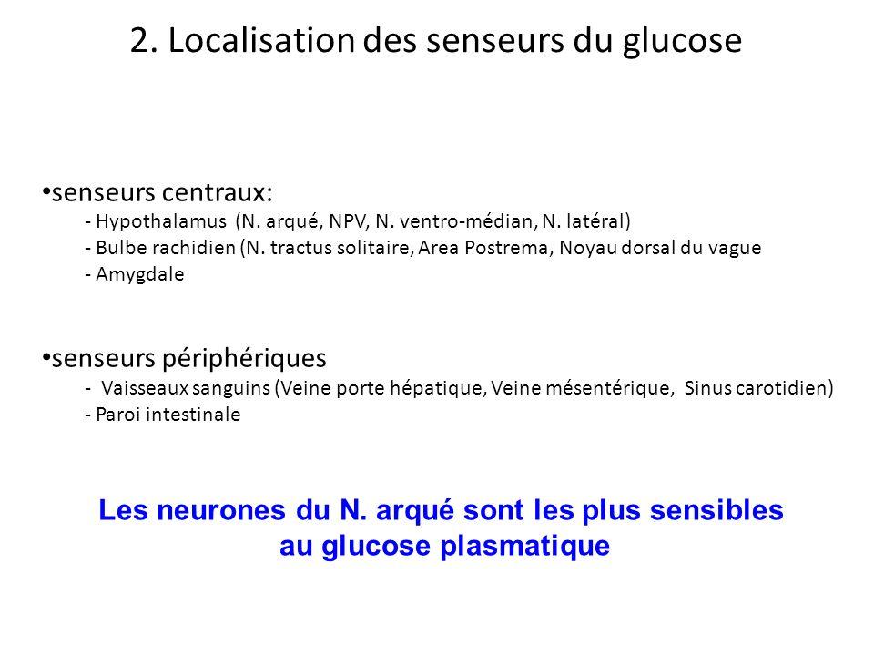 2. Localisation des senseurs du glucose