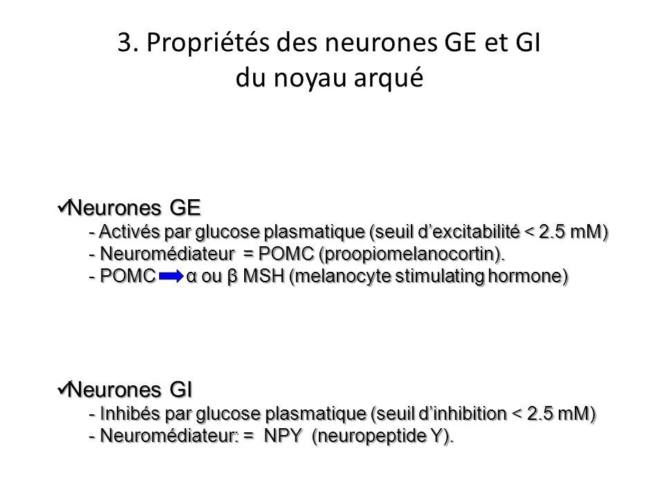 3. Propriétés des neurones GE et GI
