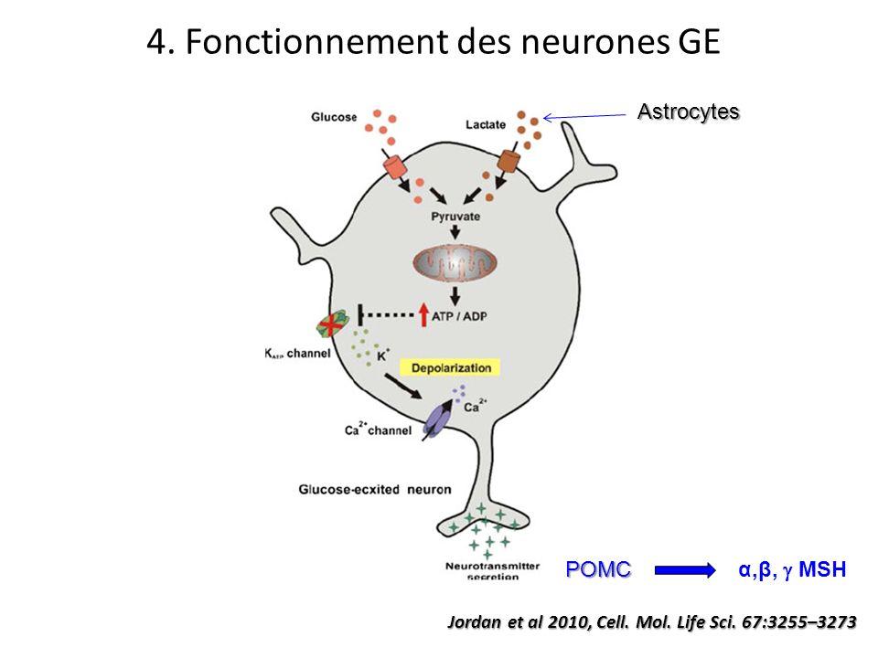 4. Fonctionnement des neurones GE