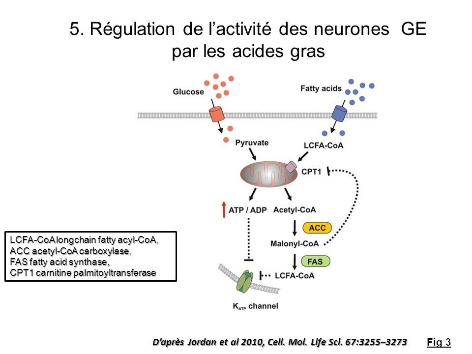 5. Régulation de l'activité des neurones GE