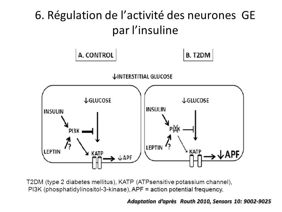6. Régulation de l'activité des neurones GE par l'insuline