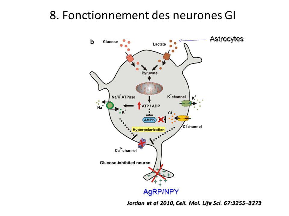 8. Fonctionnement des neurones GI