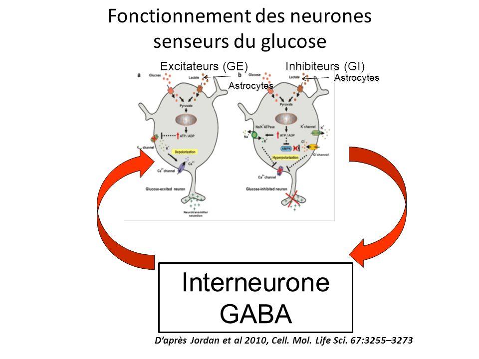 Fonctionnement des neurones
