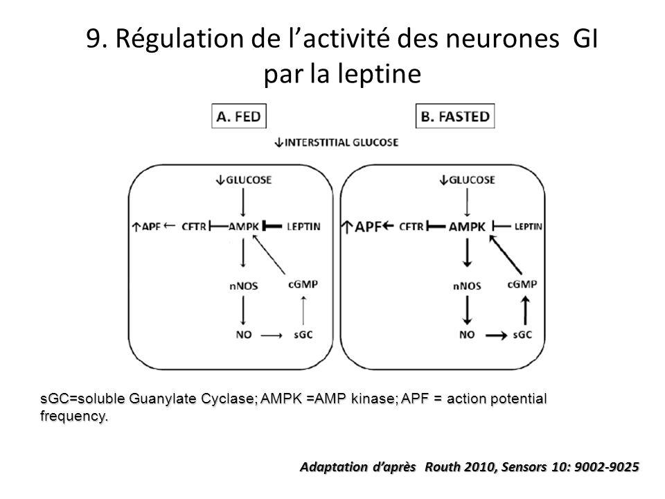 9. Régulation de l'activité des neurones GI par la leptine