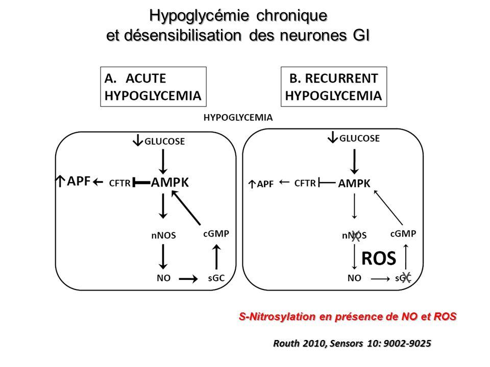 Hypoglycémie chronique et désensibilisation des neurones GI