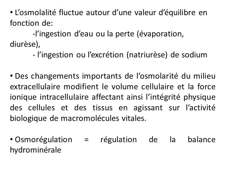 L'osmolalité fluctue autour d'une valeur d'équilibre en fonction de: