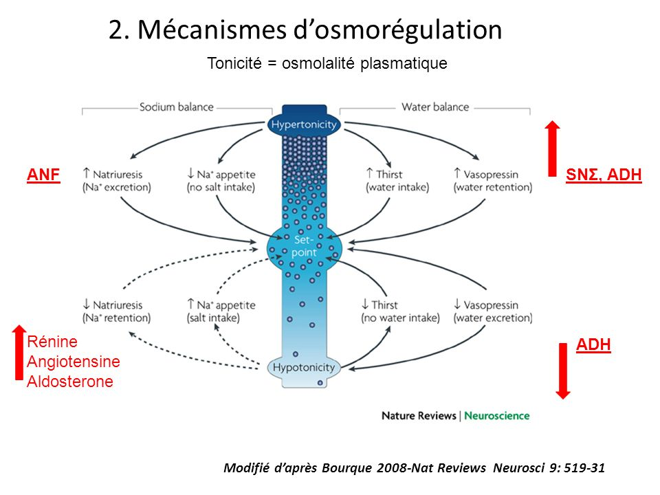 2. Mécanismes d'osmorégulation