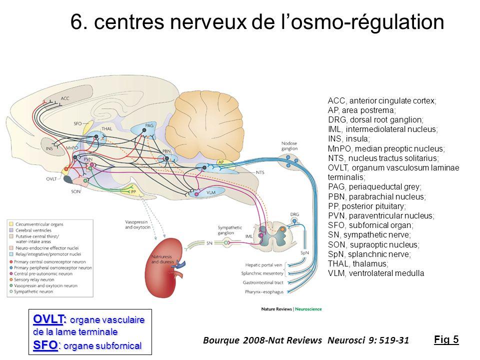 6. centres nerveux de l'osmo-régulation