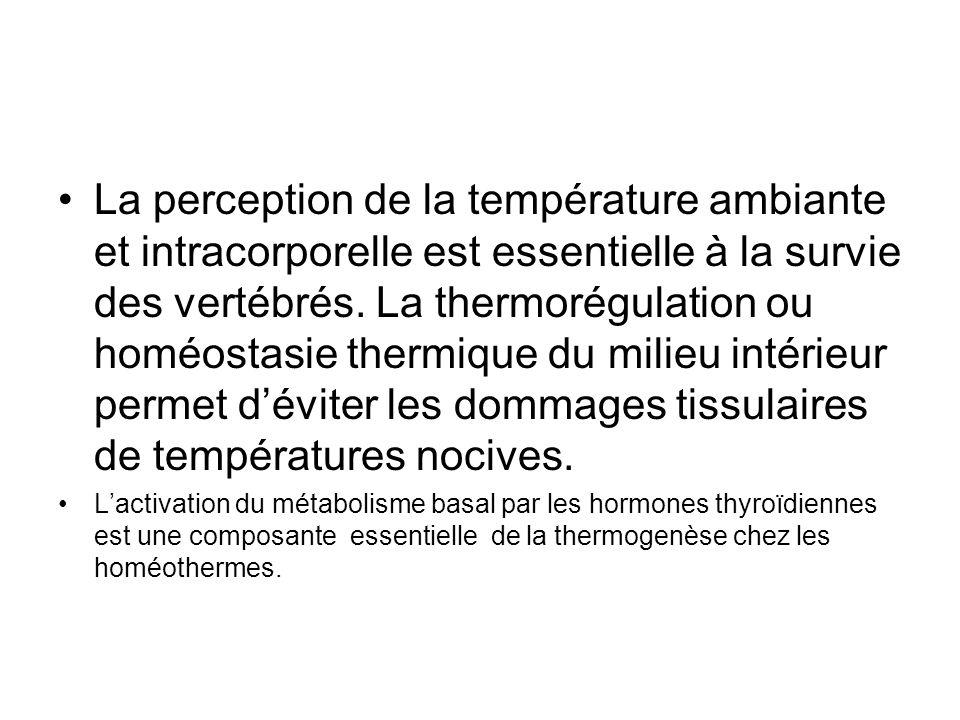 La perception de la température ambiante et intracorporelle est essentielle à la survie des vertébrés. La thermorégulation ou homéostasie thermique du milieu intérieur permet d'éviter les dommages tissulaires de températures nocives.