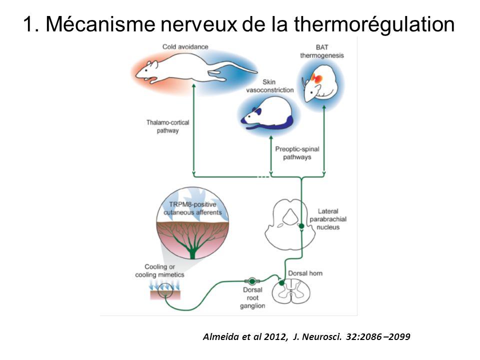 1. Mécanisme nerveux de la thermorégulation
