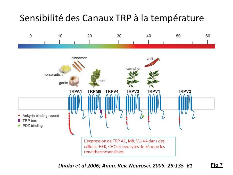 Sensibilité des Canaux TRP à la température