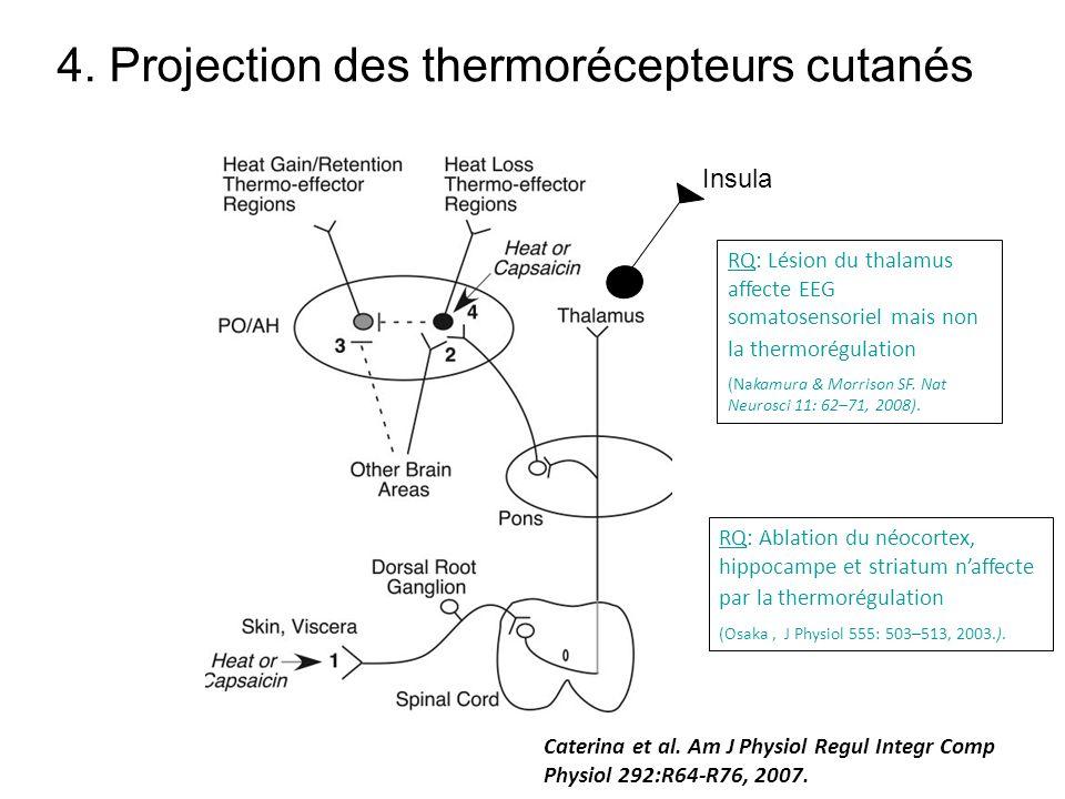4. Projection des thermorécepteurs cutanés