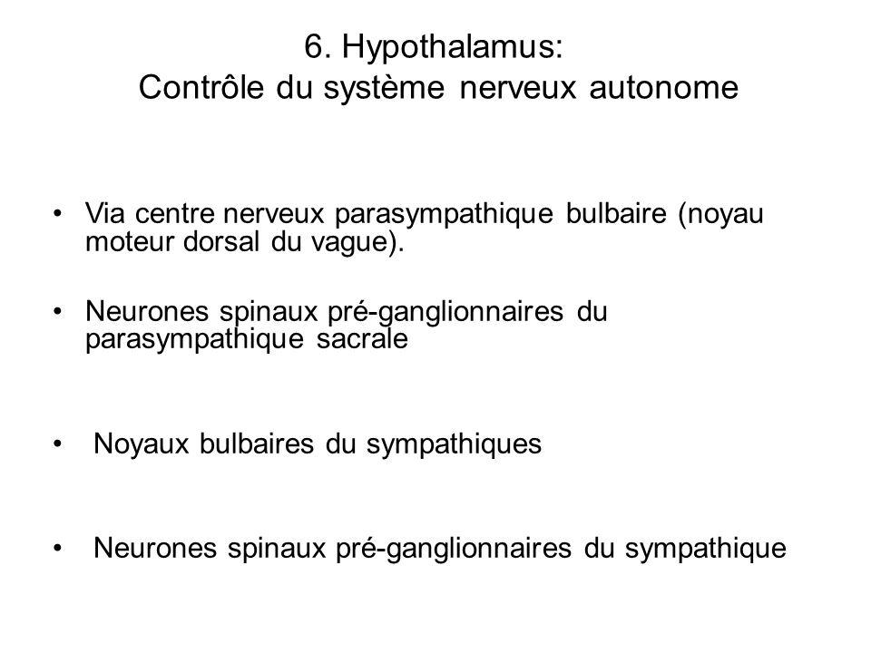 6. Hypothalamus: Contrôle du système nerveux autonome