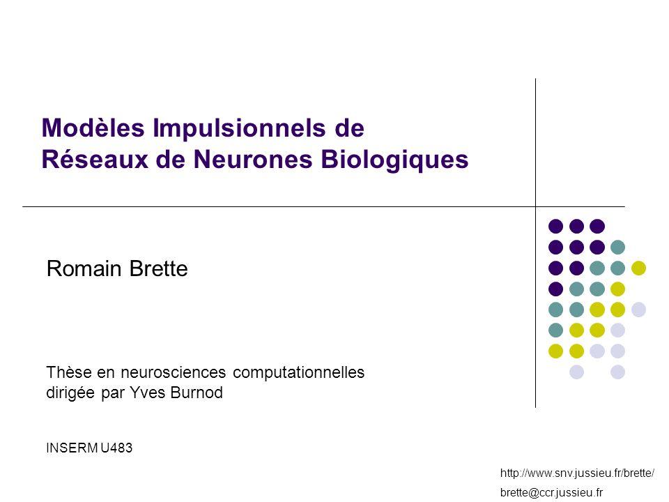Modèles Impulsionnels de Réseaux de Neurones Biologiques