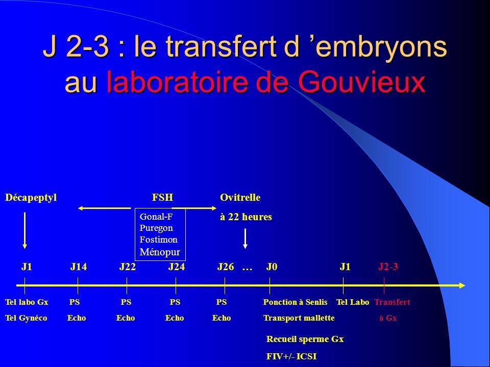 J 2-3 : le transfert d 'embryons au laboratoire de Gouvieux