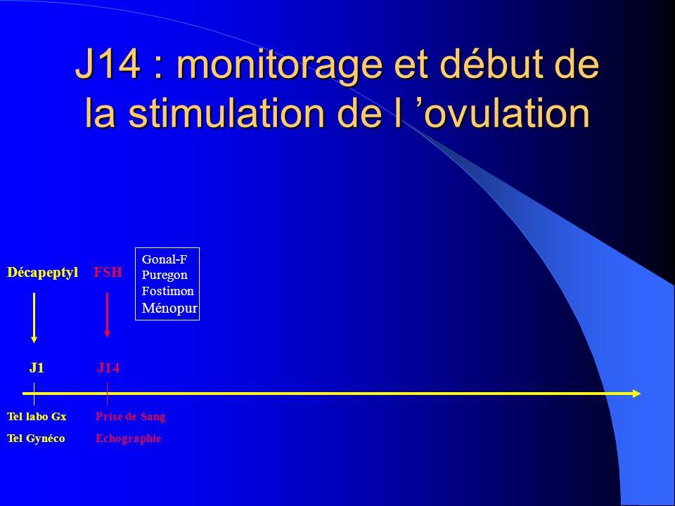 J14 : monitorage et début de la stimulation de l 'ovulation