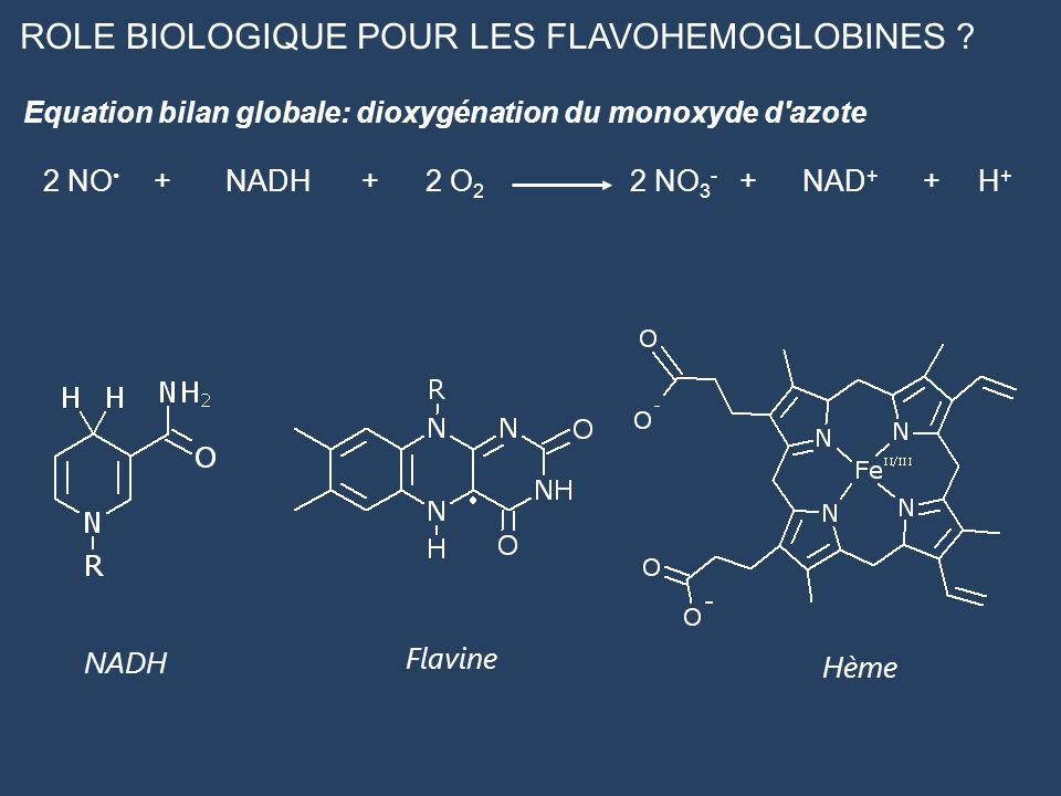 ROLE BIOLOGIQUE POUR LES FLAVOHEMOGLOBINES