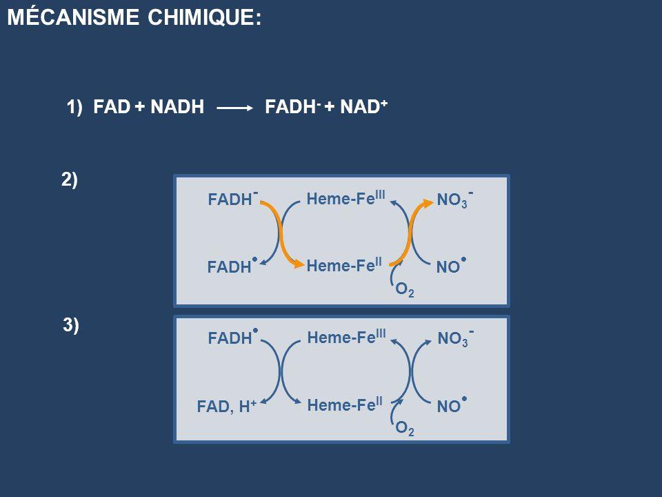 MÉCANISME CHIMIQUE: 1) FAD + NADH FADH- + NAD+ 2) 3) FADH- FADH•