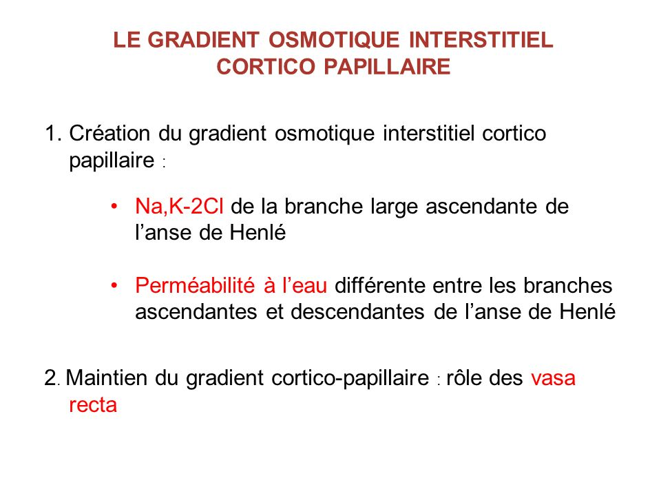 LE GRADIENT OSMOTIQUE INTERSTITIEL CORTICO PAPILLAIRE