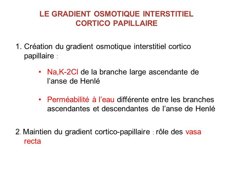 LE GRADIENT OSMOTIQUE INTERSTITIEL CORTICO PAPILLAIRE