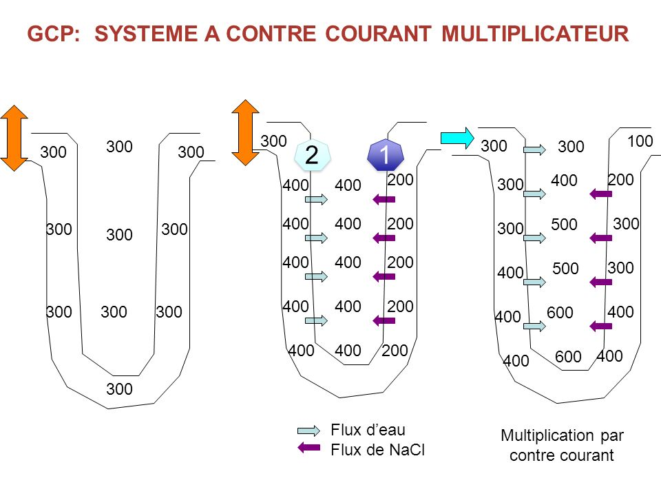 GCP: SYSTEME A CONTRE COURANT MULTIPLICATEUR