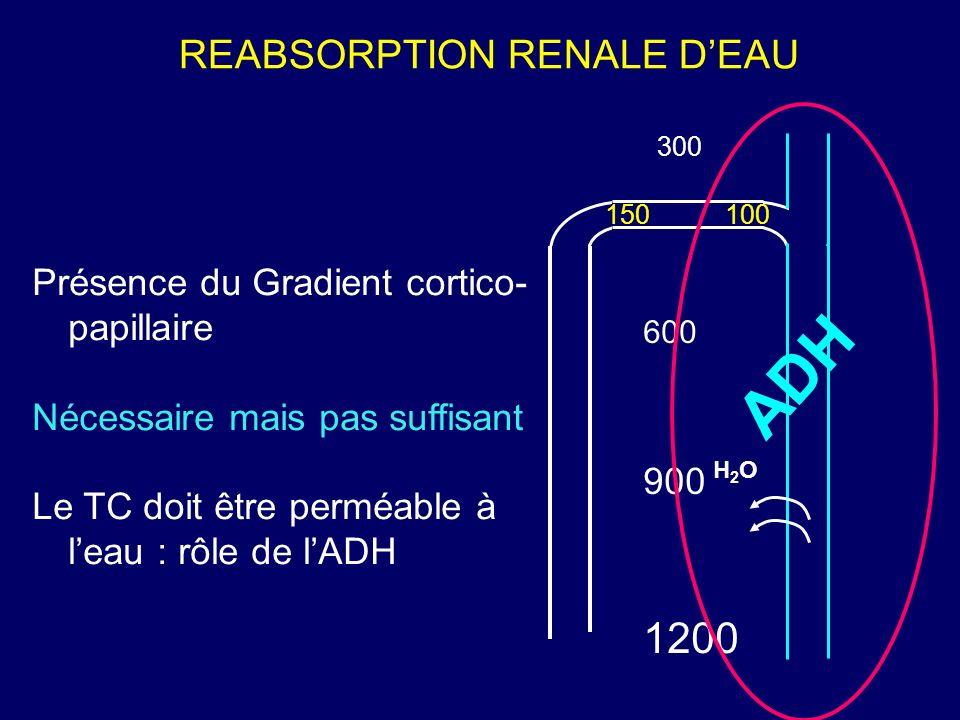 REABSORPTION RENALE D'EAU