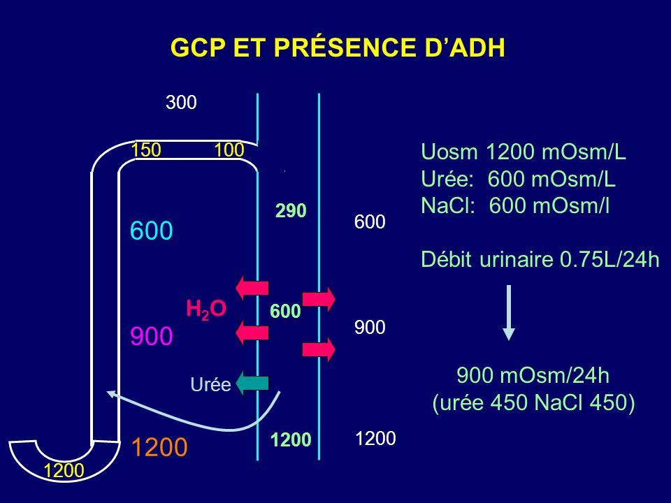 GCP ET PRÉSENCE D'ADH 600 900 1200 Uosm 1200 mOsm/L Urée: 600 mOsm/L