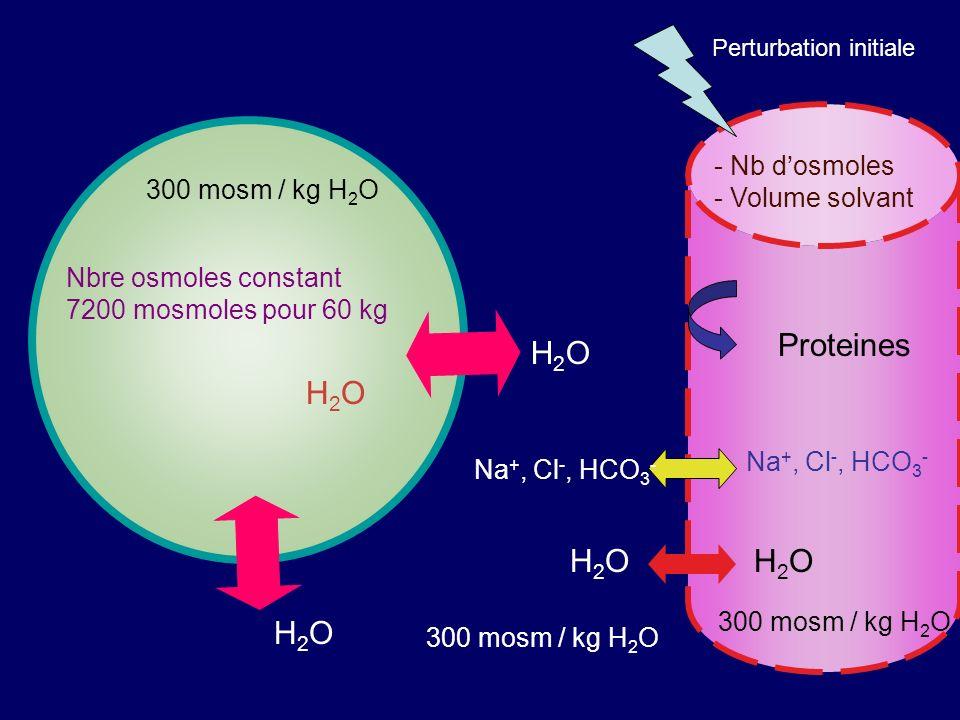 Proteines H2O H2O - Nb d'osmoles - Volume solvant 300 mosm / kg H2O