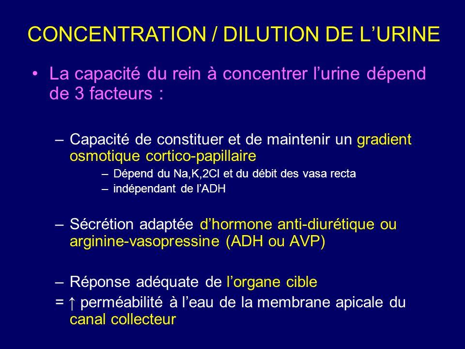 CONCENTRATION / DILUTION DE L'URINE