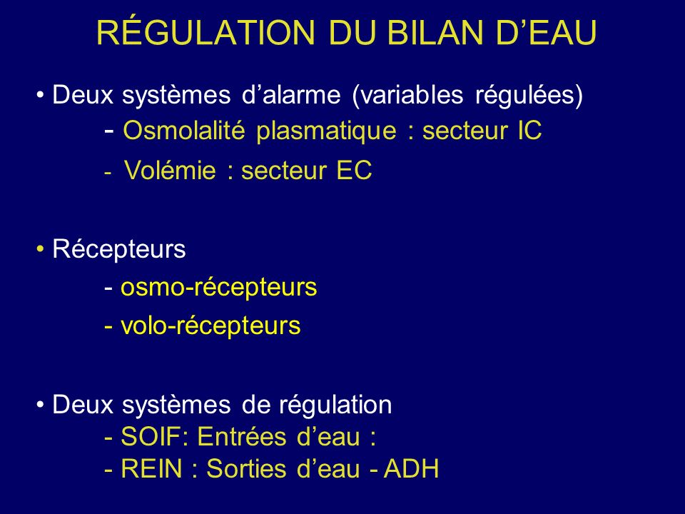 RÉGULATION DU BILAN D'EAU
