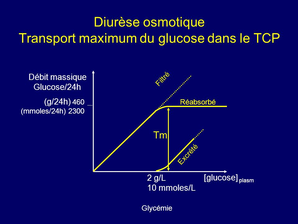 Diurèse osmotique Transport maximum du glucose dans le TCP