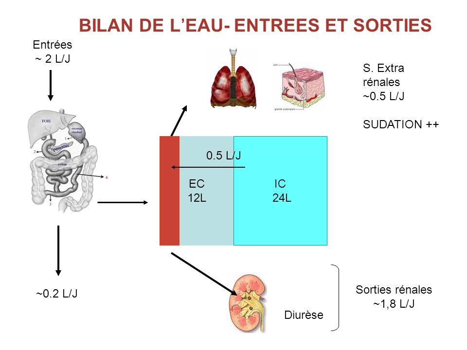 BILAN DE L'EAU- ENTREES ET SORTIES
